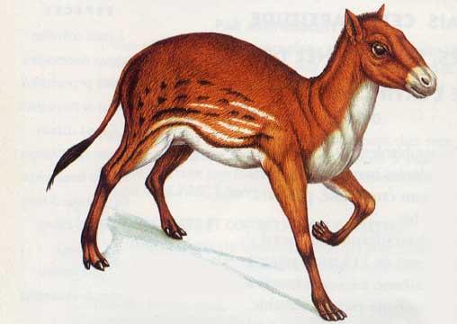 Första hästen Eohippus